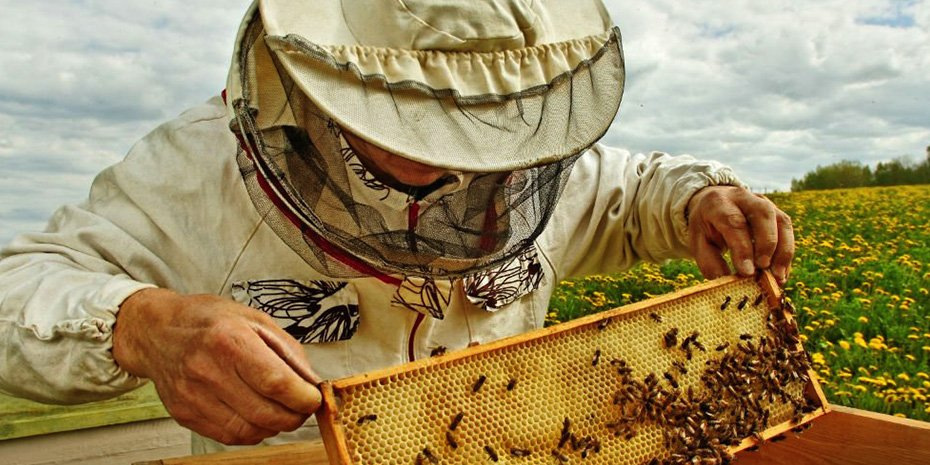 beekeeping-nectr world bee day at nectr