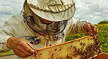 world bee day at nectr