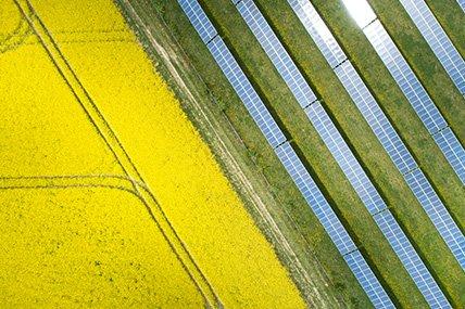 solar farm nectr